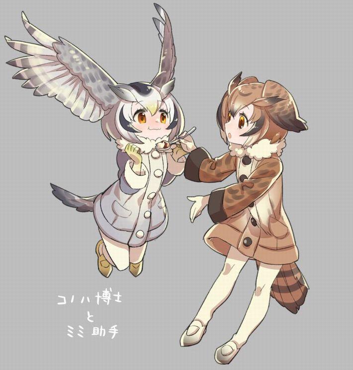 【けものフレンズ】アフリカオオコノハズク(northern white-faced owl)のエロ画像【けもフレ】【45】
