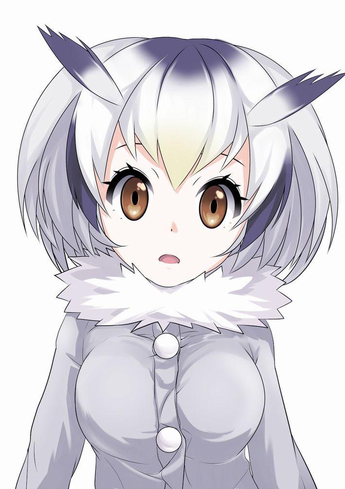 【けものフレンズ】アフリカオオコノハズク(northern white-faced owl)のエロ画像【けもフレ】【49】