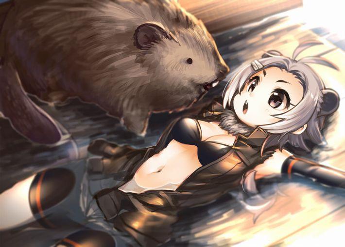 【けものフレンズ】アメリカビーバー(american beaver)のエロ画像【けもフレ】【17】