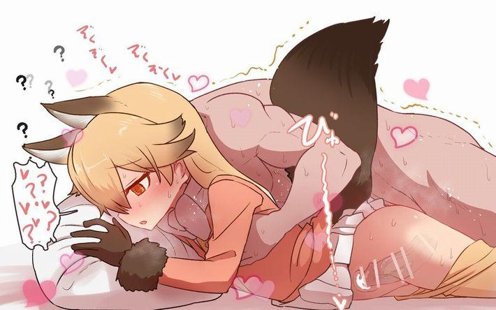 【けものフレンズ】キタキツネ(ezo red fox)のエロ画像【けもフレ】【8】