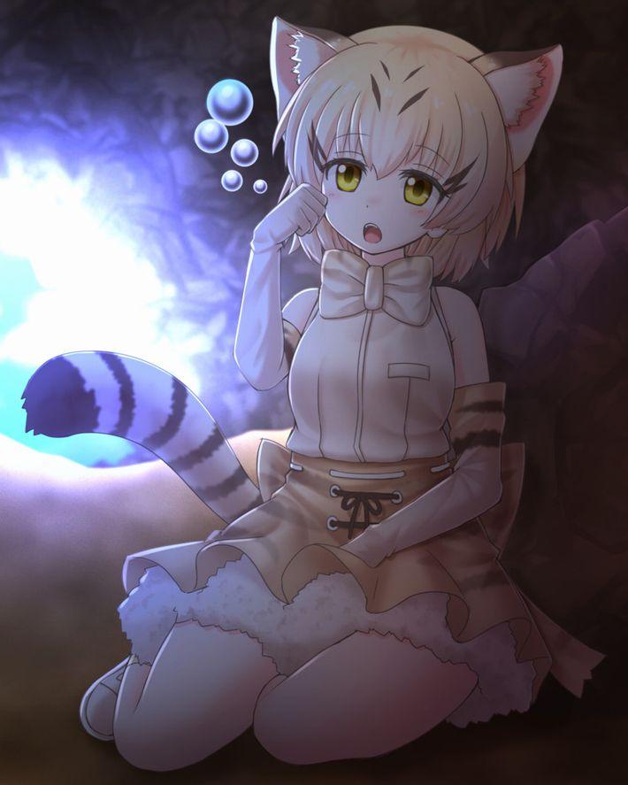 【けものフレンズ】スナネコ(sand cat)のエロ画像【けもフレ】【16】