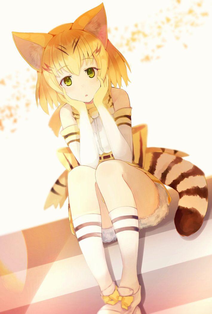 【けものフレンズ】スナネコ(sand cat)のエロ画像【けもフレ】【37】