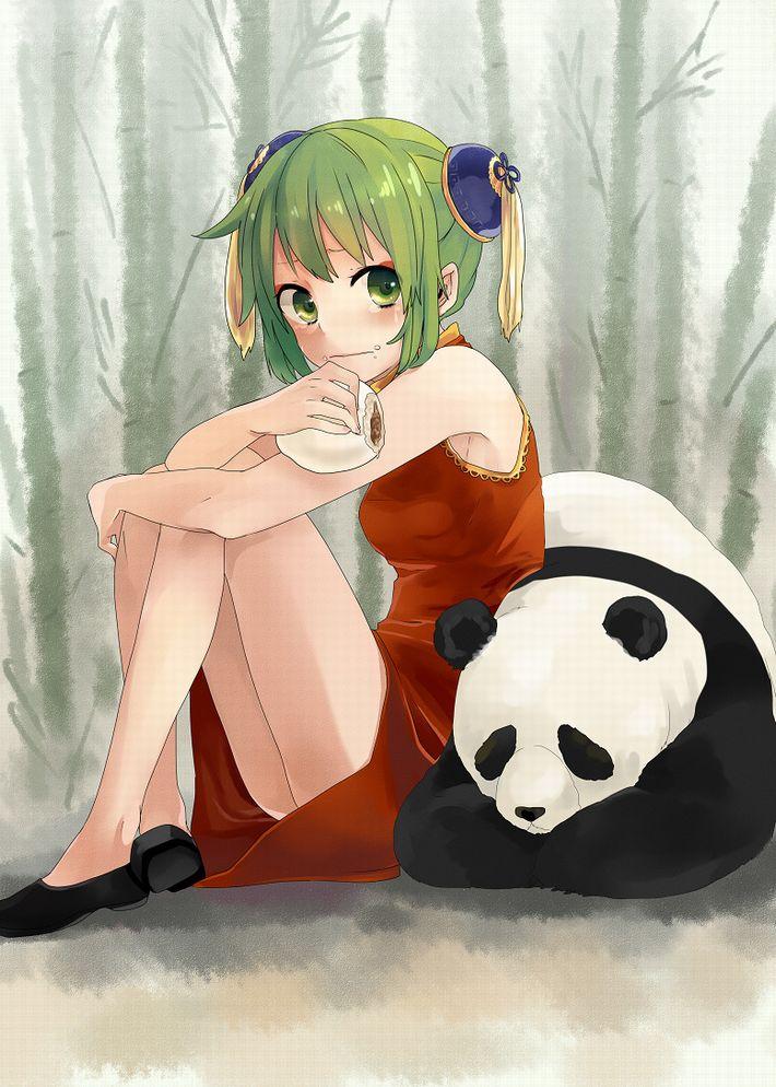【あっパンダだ!!】2月22日はネコの日なので・・・大熊猫ことパンダと美少女の二次画像【カワイイーッ】【9】
